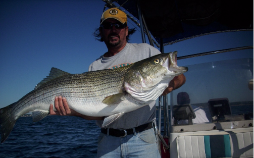 Striped Bass Lag Time Charters